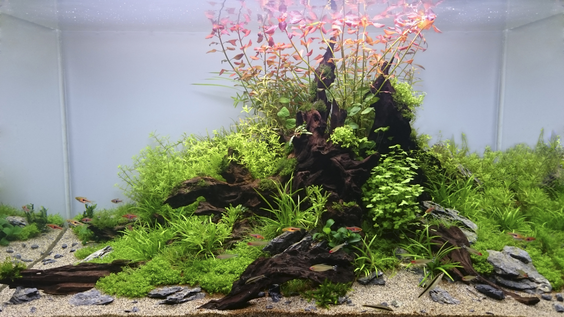 Nature_Aquarium_Style