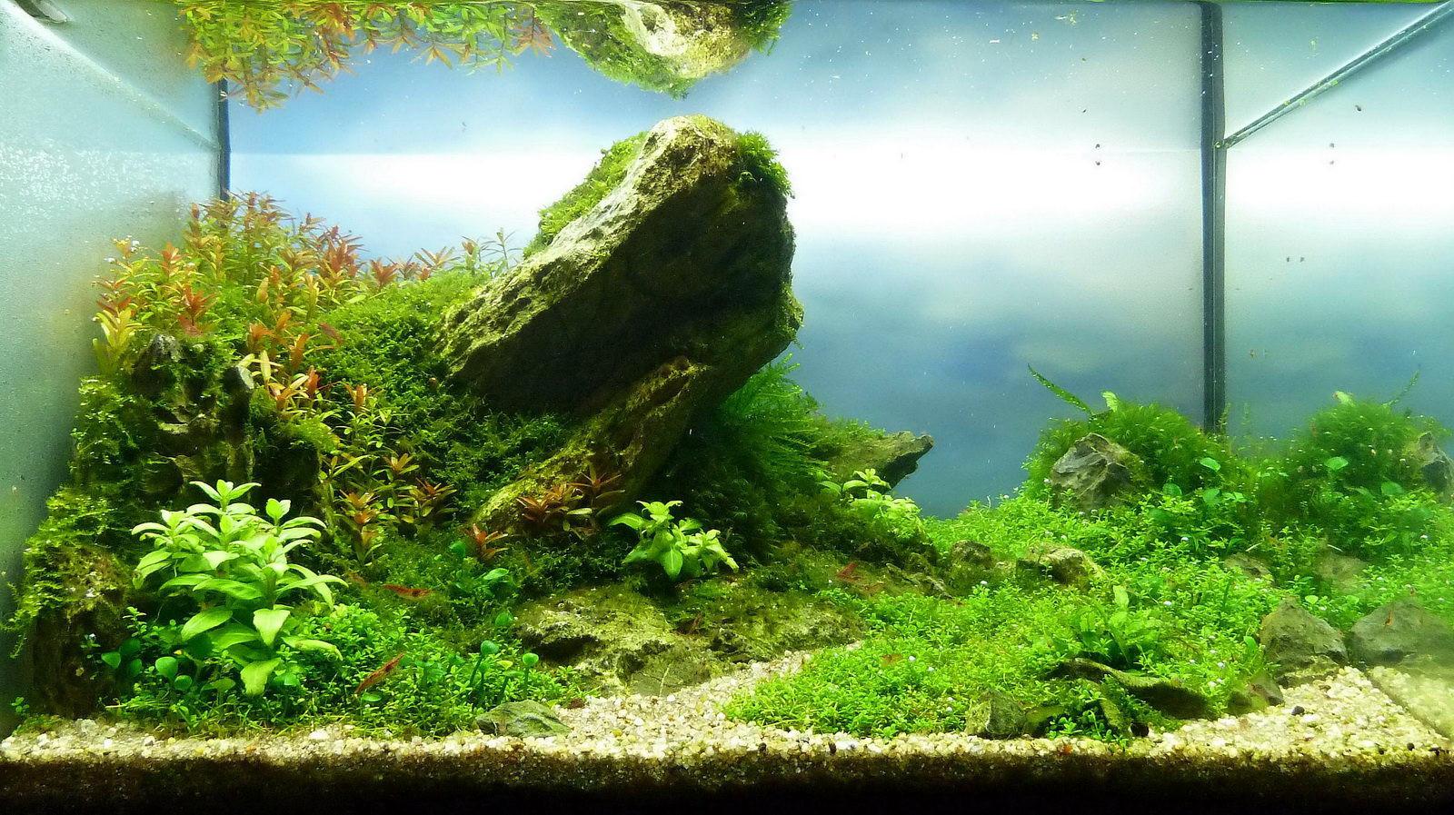 naturaquarium-aquascape-andy-01